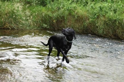 waterdog3