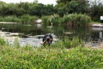 waterdog5